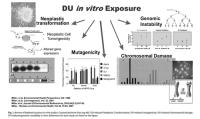 DU in-vitro Bestrahlung